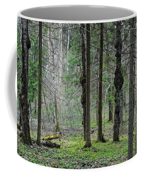 Wild Coffee Mug featuring the photograph Wild Spring Forest by Vadzim Kandratsenkau