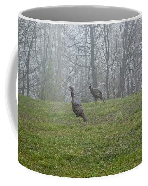 Cumberand Coffee Mug featuring the photograph Wild Turkey Grazing At Dawn by Douglas Barnett