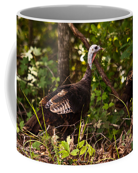 Turkey Coffee Mug featuring the photograph Wild Turkey In Tennessee by Douglas Barnett