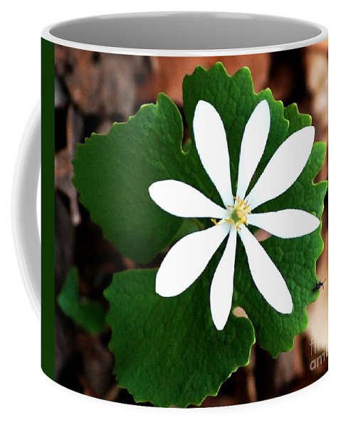 Digital Photo Coffee Mug featuring the photograph Wild White by David Lane