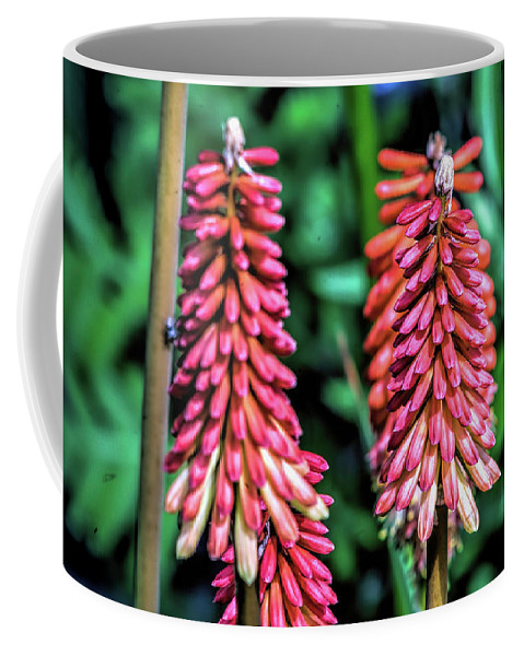 Nature Coffee Mug featuring the photograph Wildflower V8 by John Straton