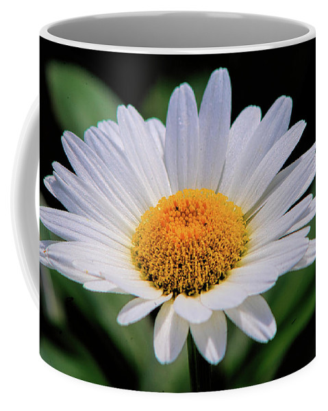 Nature Coffee Mug featuring the photograph Wildflower V9 by John Straton