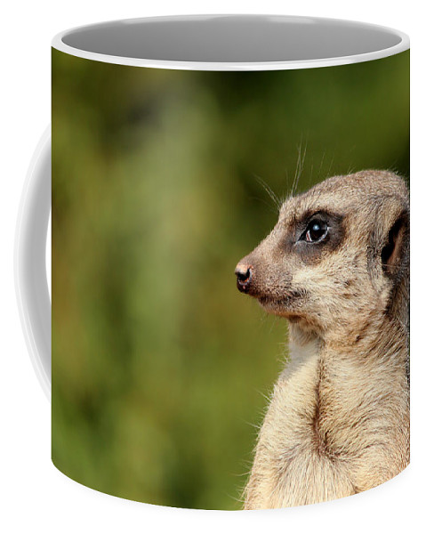 Meerkat Coffee Mug featuring the photograph Wildlife Observation by Heike Hultsch