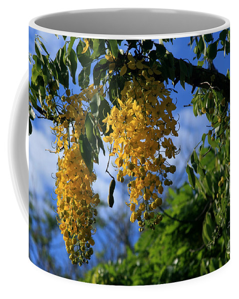 Aloha Coffee Mug featuring the photograph Wilhelmina Tenney Rainbow Shower Tree Makawao Maui Flowering Trees Of Hawaii by Sharon Mau