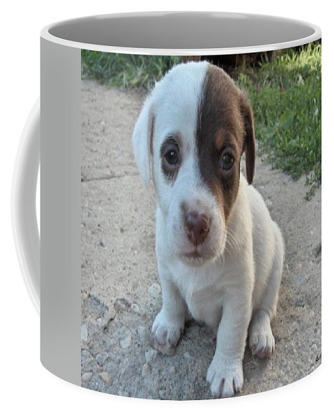 Puppy Jack Russell Terrior Dog Dogs Pets Animals Domestic Puppies Cute Coffee Mug featuring the photograph Will You Be My Friend by Andrea Lawrence