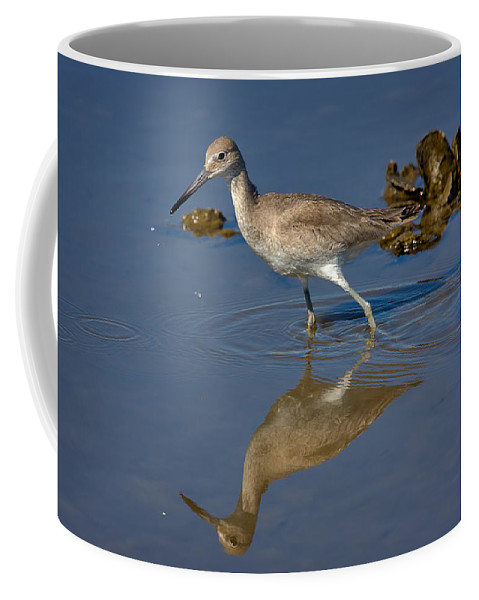 Nature Coffee Mug featuring the photograph Willet Searching For Food In An Oyster Bed by Louise Heusinkveld