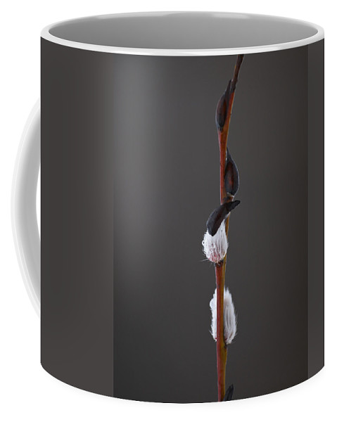Lehtokukka Coffee Mug featuring the photograph Willow Catkins 2 by Jouko Lehto