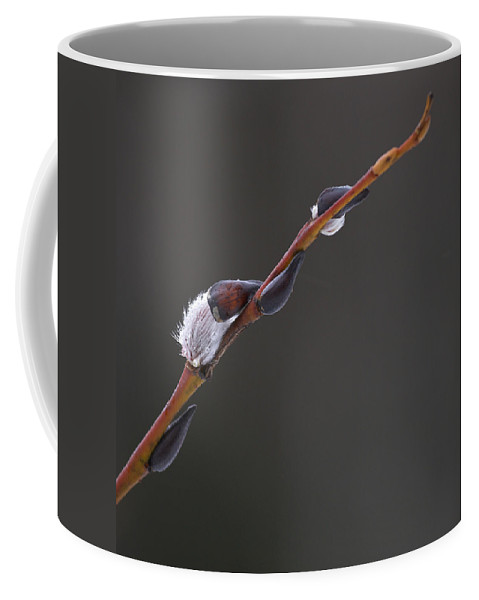 Lehtokukka Coffee Mug featuring the photograph Willow Catkins 3 by Jouko Lehto