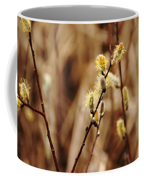 Pussy Willows Coffee Mug featuring the photograph Willow Catkins by Debbie Oppermann