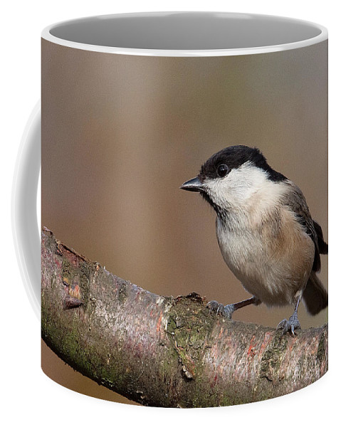 Willow Tit Coffee Mug featuring the photograph Willow Tit by Bob Kemp