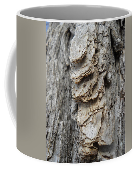 Willow Coffee Mug featuring the photograph Willow Tree Bark Up Close by Kent Lorentzen