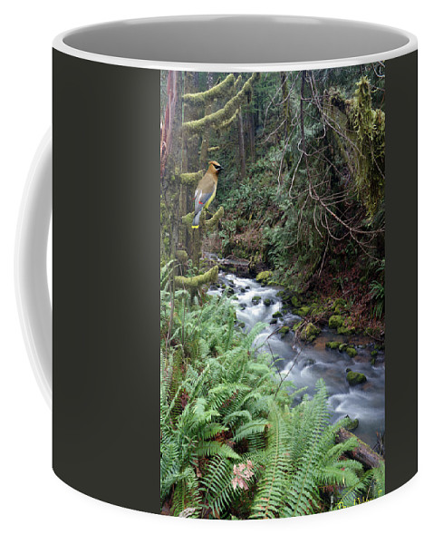 Nature Coffee Mug featuring the photograph Wilson Creek #14 With Added Cedar Waxwing by Ben Upham III