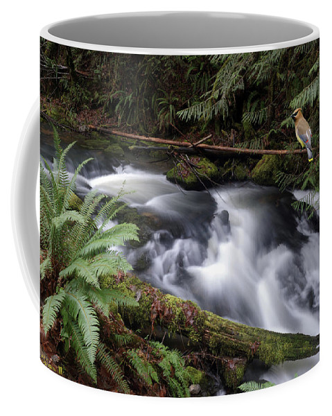 Nature Coffee Mug featuring the photograph Wilson Creek #18 With Added Cedar Waxwing by Ben Upham III