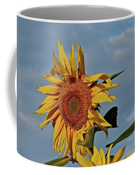Flower Coffee Mug featuring the photograph Windblown by Diana Hatcher