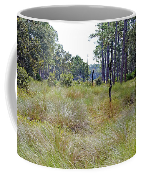 Grass Coffee Mug featuring the photograph Windblown Grass by Kenneth Albin
