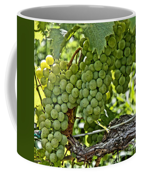 Square Coffee Mug featuring the photograph Wine Grapes by DJ Florek