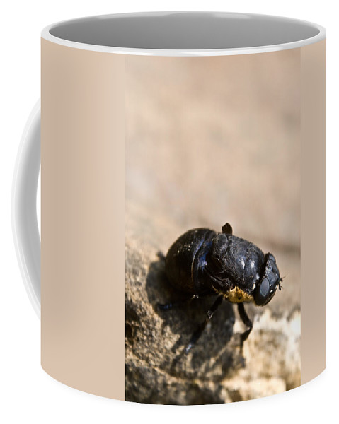 Wingless Coffee Mug featuring the photograph Wingless Fly by Douglas Barnett