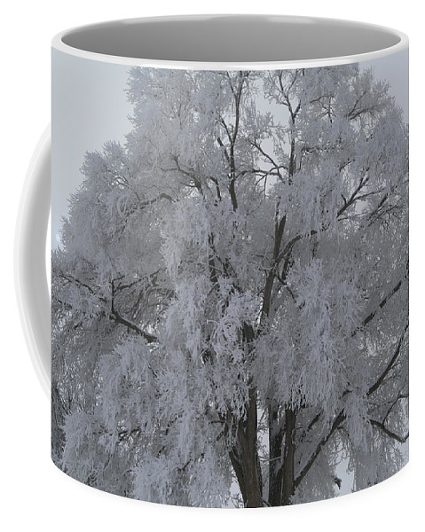 Winter Coffee Mug featuring the photograph Winter Frost by Byron Fair