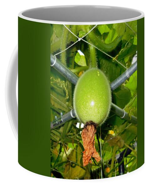 Winter Melon In Garden Coffee Mug featuring the painting Winter Melon In Garden 1 by Jeelan Clark