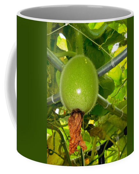 Winter Melon In Garden Coffee Mug featuring the painting Winter Melon In Garden 2 by Jeelan Clark