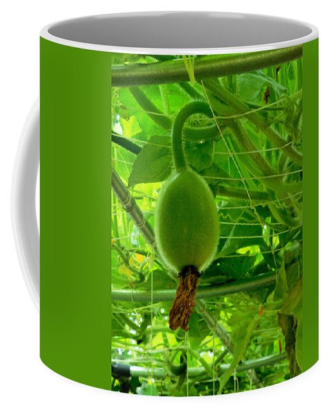 Winter Melon In Garden Coffee Mug featuring the painting Winter Melon In Garden 3 by Jeelan Clark