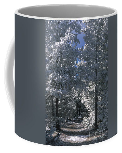 Yellowstone National Park Coffee Mug featuring the photograph Winter Pathway by Sandra Bronstein