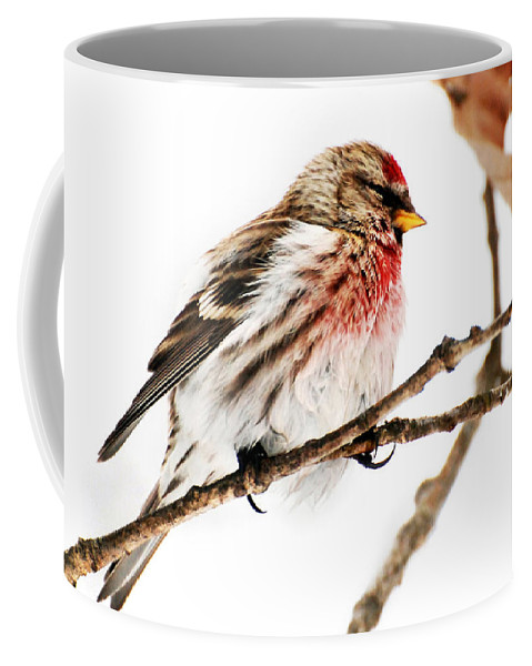 Winter Coffee Mug featuring the photograph Winter Redpoll by Christina Rollo