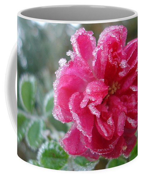 Rose Coffee Mug featuring the photograph Winter Rose by Susan Baker