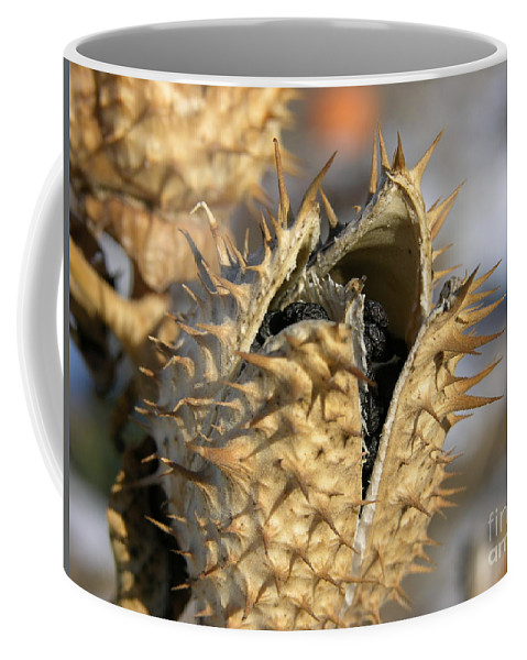Winter Nature Coffee Mug featuring the photograph Winter Seed Pod by Carol Groenen