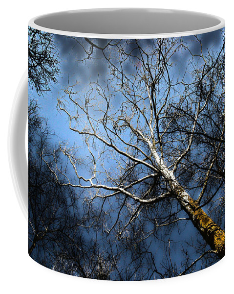 Tree Coffee Mug featuring the photograph Winter Sycamore by Mykel Davis