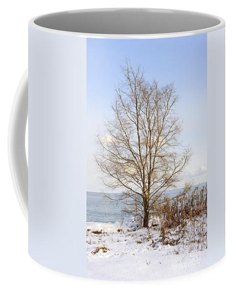 Tree Coffee Mug featuring the photograph Winter Tree On Shore by Elena Elisseeva