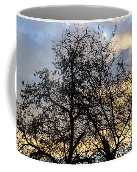 Winter Coffee Mug featuring the photograph Winter Trees At Sunset by Andrea Mazzocchetti