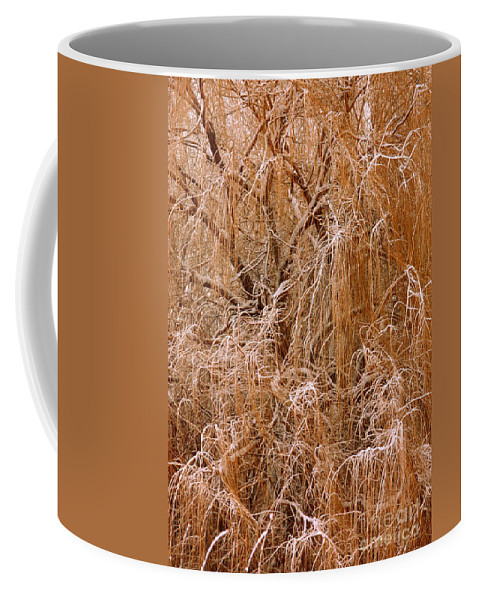Winter Tree Coffee Mug featuring the photograph Winter Willow Branches by Carol Groenen