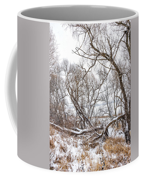 Steve Harrington Coffee Mug featuring the photograph Winter Woods On A Stormy Day 2 by Steve Harrington