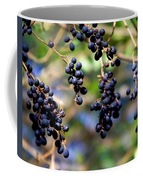 Berry Coffee Mug featuring the photograph Winterberries I by Jai Johnson