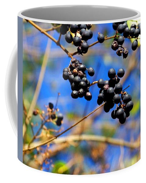 Winter Coffee Mug featuring the photograph Winterberries II by Jai Johnson