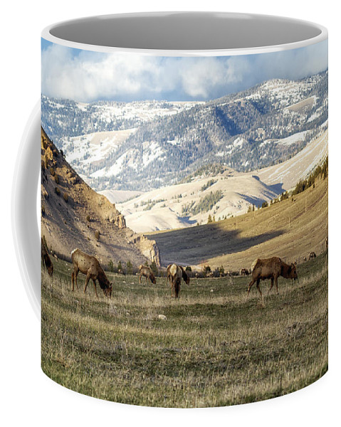 Elk Coffee Mug featuring the photograph Wintering Grounds by Belinda Greb