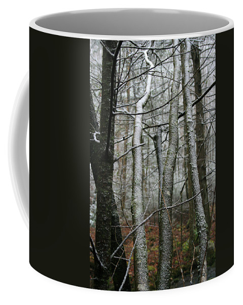 Tree Woods Forest Wood Snow White Green Winter Season Nature Cold Coffee Mug featuring the photograph Wintery Day by Andrei Shliakhau