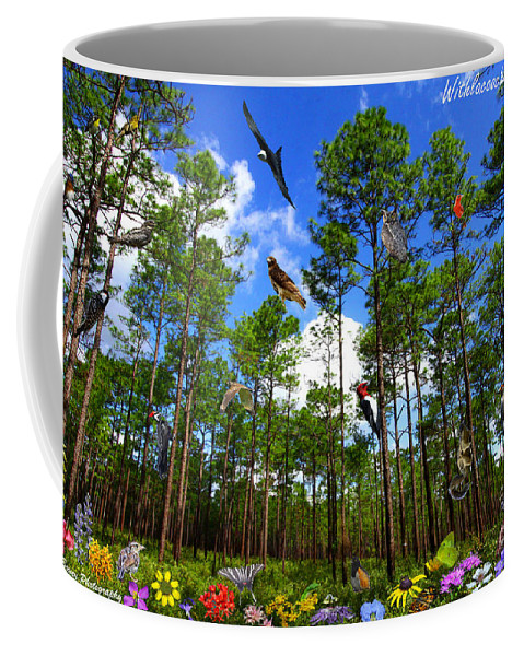 Withlacoochee State Forest Coffee Mug featuring the photograph Withlacoochee State Forest Nature Collage by Barbara Bowen