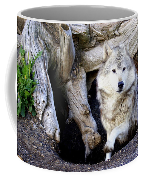 Wolf Coffee Mug featuring the photograph Wolf Den 1 by Marty Koch