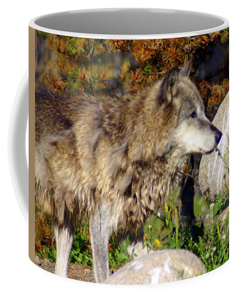 Wolf Coffee Mug featuring the photograph Wolf On Patorl by Marty Koch