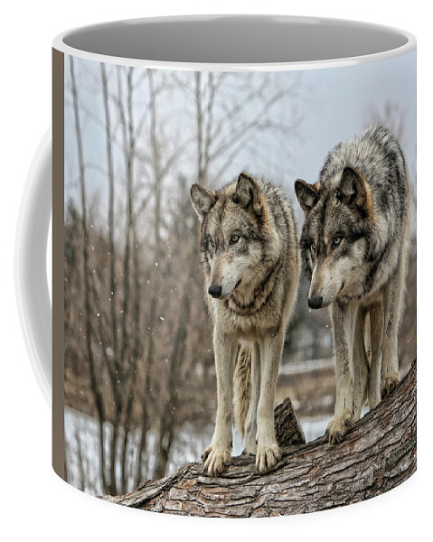 Wolf Wolves Animal Wildlife Mammal Photography Photograph Canis Lupis Grey Timberwolf Coffee Mug featuring the photograph Wolf Pair by Shari Jardina