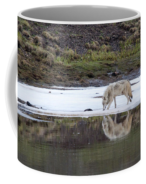 Yellowstone Coffee Mug featuring the photograph Wolflection by Steve Stuller