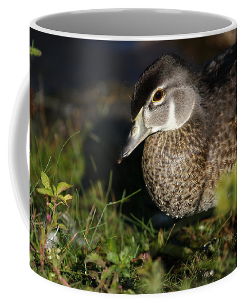 Wood Duck Coffee Mug featuring the photograph Wood Duck Female by Karol Livote