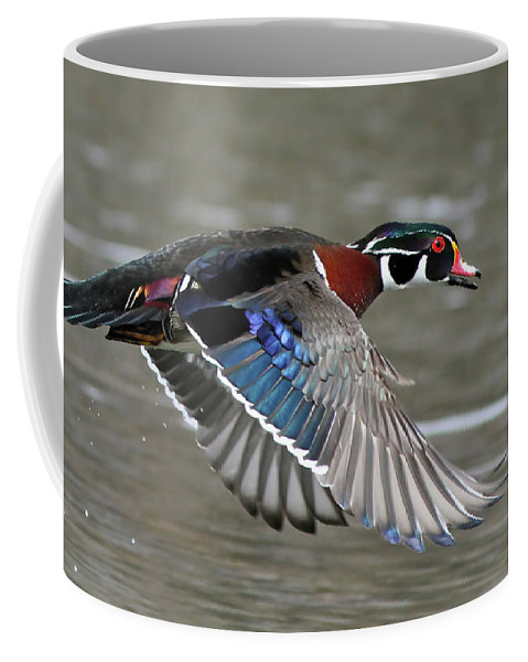 Aix Coffee Mug featuring the photograph Wood Duck In Action by Mircea Costina Photography