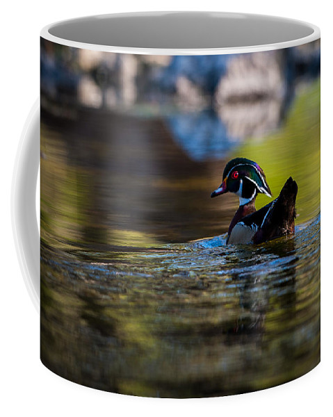 Waterfowl Coffee Mug featuring the photograph Wood Duck On Mill Creek by Jeff Phillippi