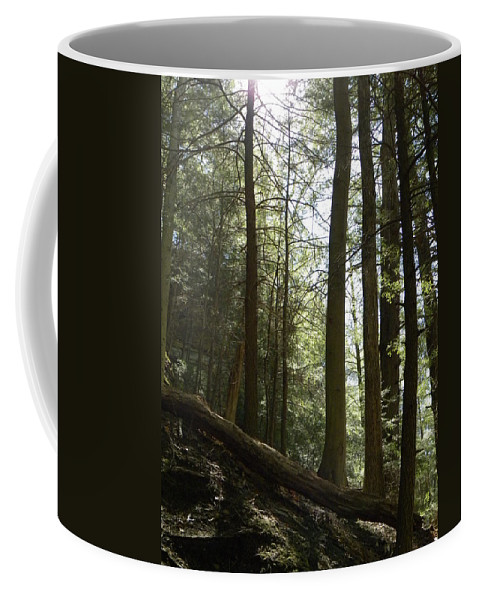 Woods Coffee Mug featuring the photograph Wooded Serenity by Kimberly Owens