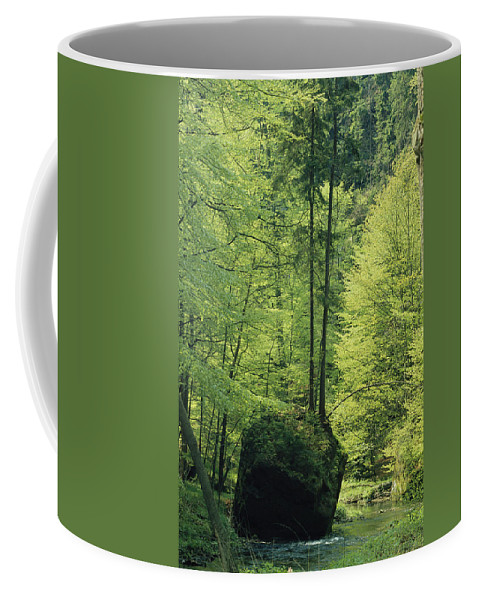 Europe Coffee Mug featuring the photograph Woodland View With Stream, Sachsische by Norbert Rosing
