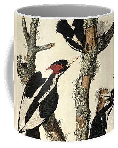 Woodpecker Coffee Mug featuring the drawing Woodpecker by John James Audubon