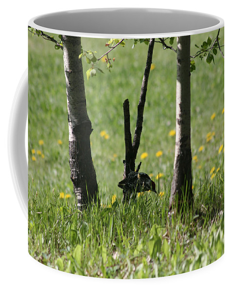 Birds Bird Woodpecker Nature Grass Trees Wildlife Mother Nature Coffee Mug featuring the photograph Woodpecker Snack Time by Andrea Lawrence